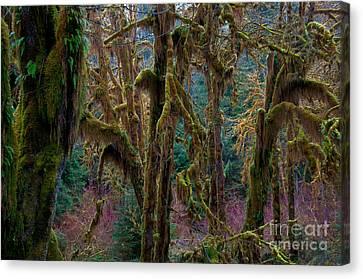 Hoh Rainforest, Olympic National Park Canvas Print by Mark Newman