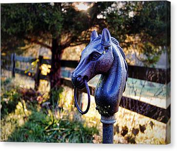 Hold Your Horses Canvas Print by Cricket Hackmann