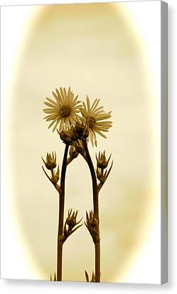 Holding On Canvas Print by Andrea Dale