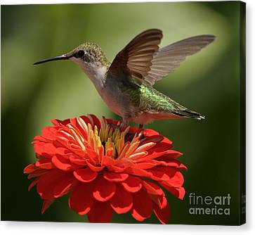 Canvas Print featuring the photograph Holding On by Olivia Hardwicke