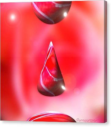 Holiday Droplet - Christmas Rose Canvas Print by Anna Porter