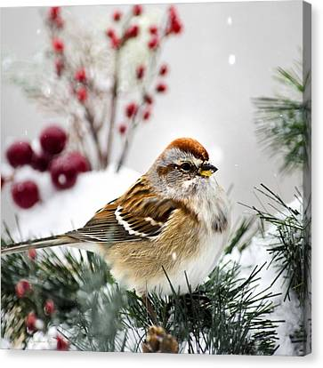 Holiday Tree Sparrow Square Canvas Print by Christina Rollo