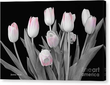 Canvas Print featuring the photograph Holland Tulips In Black And White With Pink by Jeannie Rhode