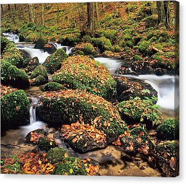 Hollbach Stream Near Gorwhil, Black Canvas Print by Panoramic Images
