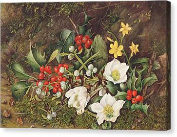 Holly And Christmas Roses Canvas Print by Jane Taylor