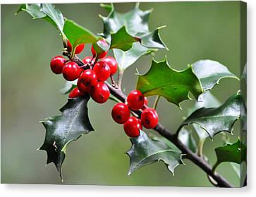Holly Berries Canvas Print by Bill Cannon