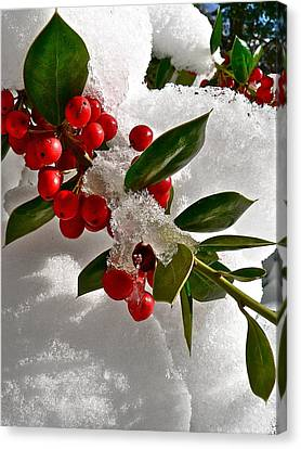 Holly Berries Canvas Print