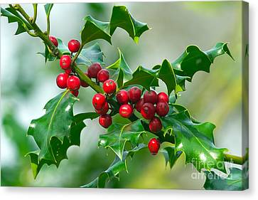 Holly Berries Canvas Print by Sharon Talson
