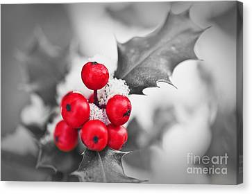 Holly Canvas Print by Delphimages Photo Creations