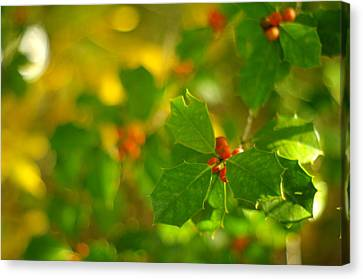 Canvas Print featuring the photograph Holly In The Wood by Suzanne Powers