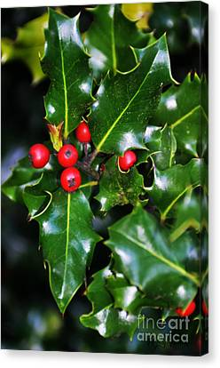 Canvas Print featuring the photograph Holly by Mindy Bench