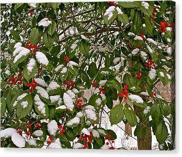 Holly - Winter Canvas Print