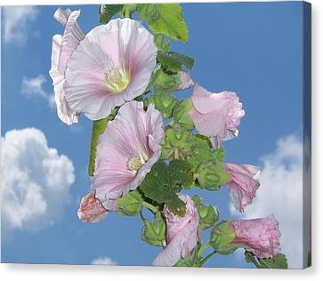Canvas Print featuring the photograph Hollyhock by John Mathews