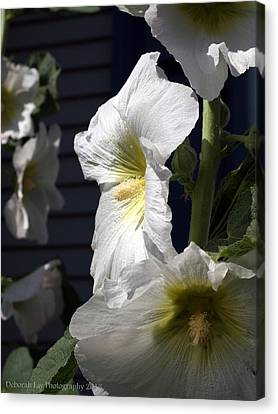 Hollyhock Nostalgia Canvas Print by Deborah Fay