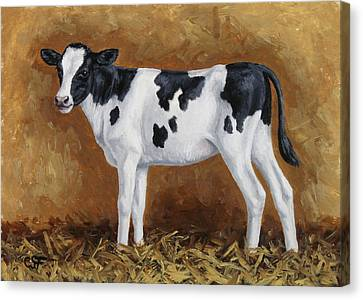 Cow Canvas Print - Holstein Calf by Crista Forest