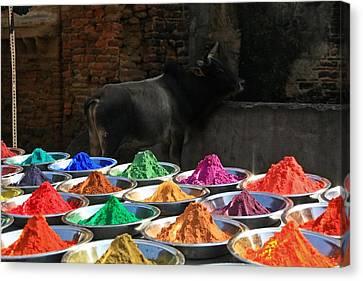 Holy Colors Canvas Print by Renato Sensibile