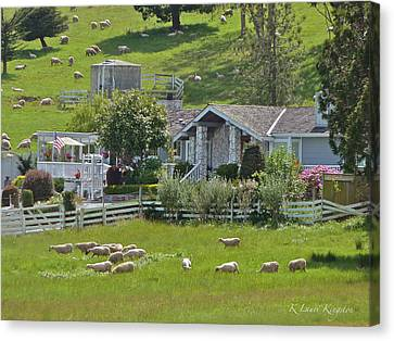 Home Sheep Home Canvas Print