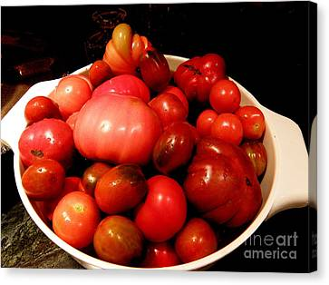 Homegrown Bounty  2 Canvas Print by Tanya  Searcy
