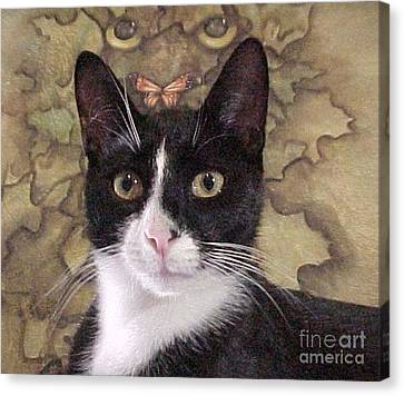 Homeless Kitty To Super Model Canvas Print by Robert Stagemyer