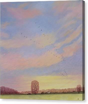 Swallow Canvas Print - Homeward by Ann Brian