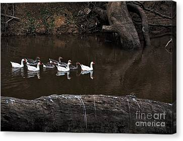 Homeward Bound Canvas Print by Kaye Menner