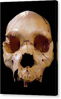Homo Heidelbergensis Skull (cranium 5) Canvas Print by Javier Trueba/msf