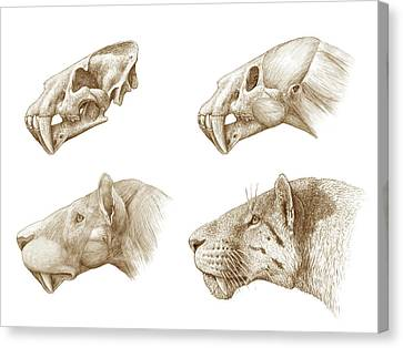 Homotherium Sabre-toothed Cat Canvas Print by Mauricio Anton