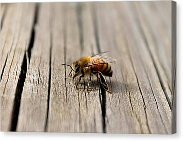Canvas Print featuring the photograph Honey Bee Beauty Shot by Candice Trimble