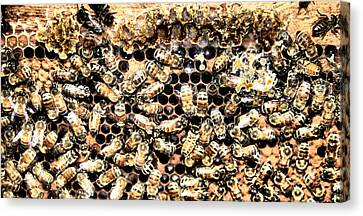 Honey Bee Canvas Print by Dan Sproul