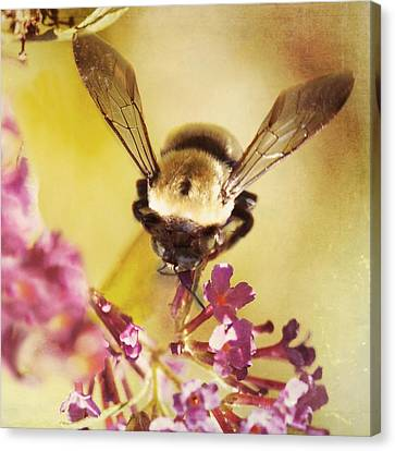 Honey Bee Canvas Print by Kim Fearheiley