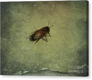 Honey Bee Canvas Print by Kristine Nora