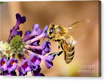 Honey Bee On Butterfly Bush Canvas Print by Jean A Chang