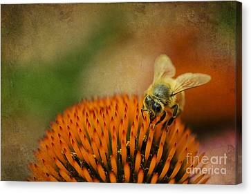 Honey Bee On Flower Canvas Print by Dan Friend