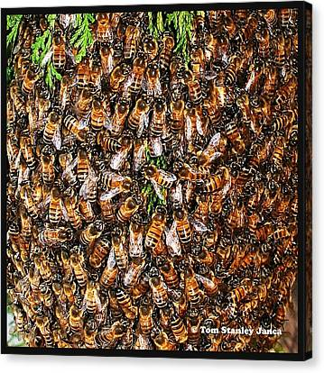 Canvas Print featuring the photograph Honey Bee Swarm by Tom Janca