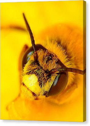 Honey Bee Yellow Canvas Print by Chris Fraser