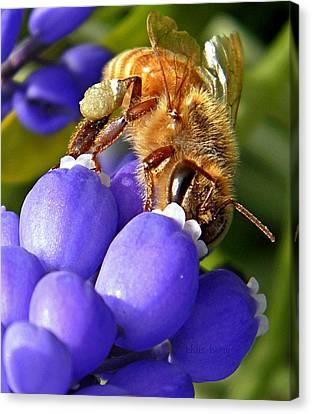 Honeybee And Muscari Canvas Print