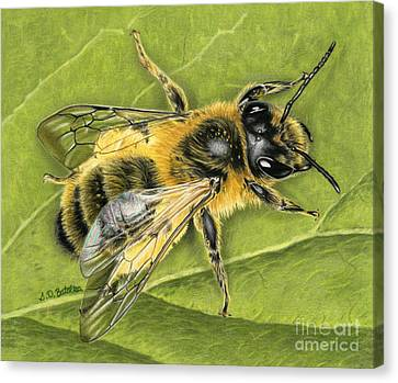Honeybee On Leaf Canvas Print by Sarah Batalka