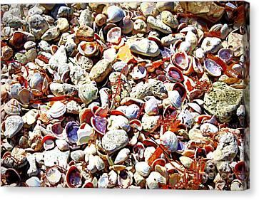 Honeymoon Island Shells - Digital Art Canvas Print by Carol Groenen