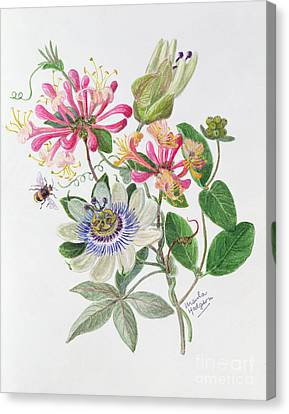 Passiflora Canvas Print - Honeysuckle And Passion Flower  by Ursula Hodgson