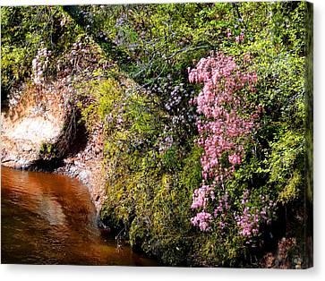 Honeysuckle On Buckatunna Creek Canvas Print by Lanita Williams