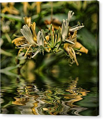 Honeysuckle Canvas Print by Rick Friedle