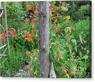 Honeysuckle's Friend Canvas Print by Brenda Brown