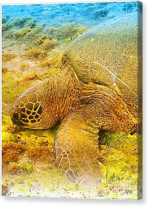 Honu  Sea Turtle Canvas Print