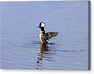 Hooded Merganser Canvas Print by Wild Expressions Photography