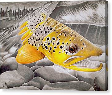 Salmon Canvas Print - Hookjaw On The Move by Nick Laferriere