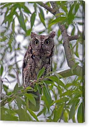 Hooo You Lookin At ? Canvas Print
