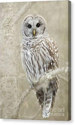 Hoot Hoot Hoot  Canvas Print by Beve Brown-Clark Photography