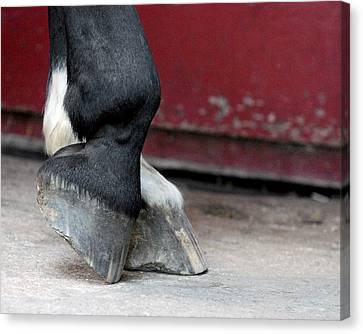 Hooves Canvas Print by Lisa Phillips