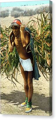 Hopi Corn Harvest, C1902 Canvas Print by Granger