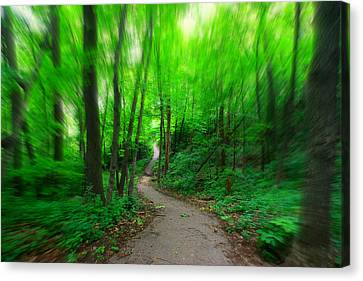Hopkins Path Canvas Print by Amanda Stadther